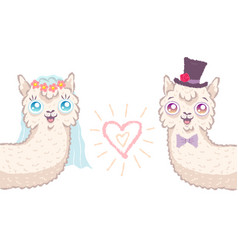 llamas for wedding invitation vector image