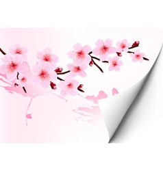Spring background with a blossoming sakura branch vector image