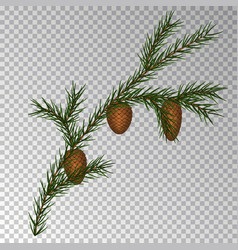 christmas decorations with fir tree and pine cones vector image