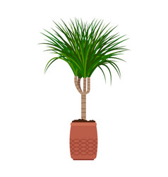 dracaena house plant vector image