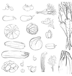 Fresh Vegetables Sketch Collection vector image vector image