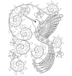 Coloring page with Hummingbird zentangle flying vector
