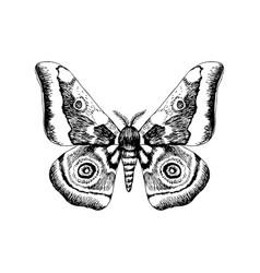 hand drawn african emperor moth - gonimbrazia vector image