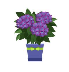 hydrangea house plant vector image