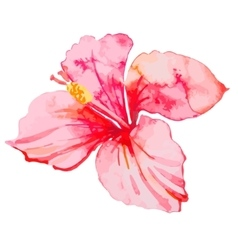 set tropical flowers hibiscus leaves vector image