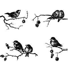 Sketches sparrows sitting on tree branches on vector