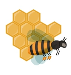 Insect honey bee isolated on white vector image