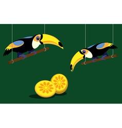 Cartoon toucans vector image
