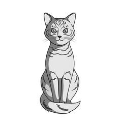 gray catanimals single icon in monochrome style vector image vector image