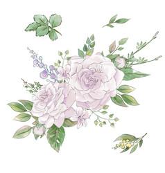 a large set watercolors tender roses super vector image