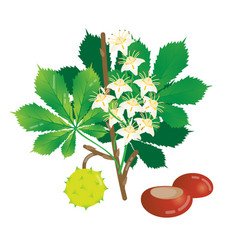 blooming chestnut vector image