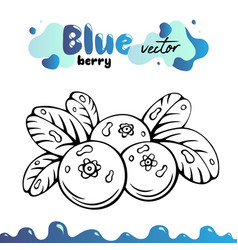 blueberry berries images vector image