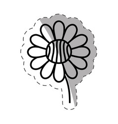 flower daisy ornament monochrome vector image