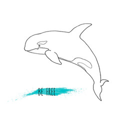 killer whale orca vector image