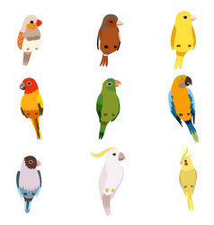 little birds set amadin sparrow canary parrot vector image
