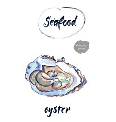 Oyster watercolor vector