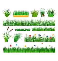 growing grass template for garden vector image vector image