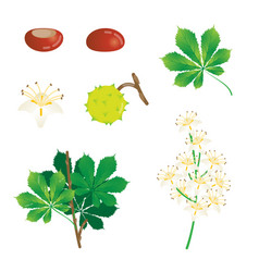Chestnut elements collection vector