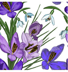 floral seamless pattern with snowdrop and crocus vector image