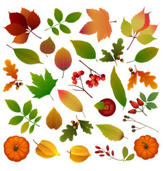 set leaves and berries vector image