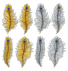 Set of images of gold and silver peacock feathers vector