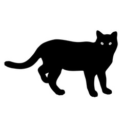 silhouette of the lynx on a white background vector image