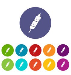 dried wheat ear icons set flat vector image
