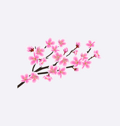 blooming sakura branch with flowers cherry tree vector image