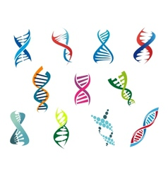 DNA molecules and symbols vector image
