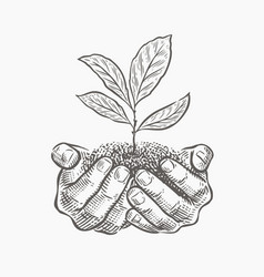 hands and plant sketch vector image