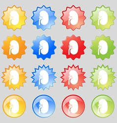 Kidney icon sign Big set of 16 colorful modern vector image