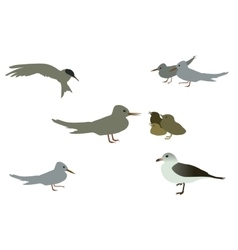 Set of Seabird seagull Isolated on White vector image