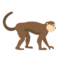 macaque monkey icon isolated vector image vector image