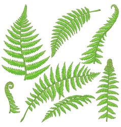 green fern leaves sketch vector image