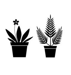 pot plants vector image vector image
