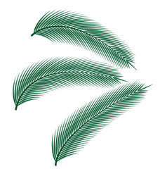 tropical palm leaves vector image vector image