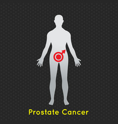 prostate cancer icon vector image
