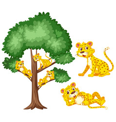 Big tree and cute tigers on white background vector