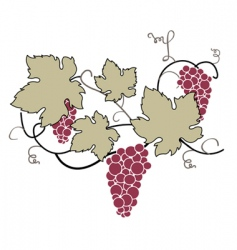 decorative grape vine vector image