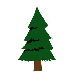 Forest pine tree foliage natural trunk icon vector