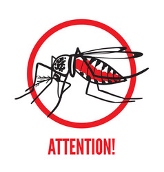 Insect mosquito aedes aegypti vector