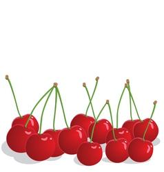 Ripe cherries vector