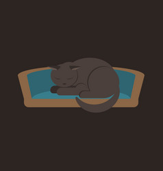 the gray house cat sleeps on its cat s bed vector image