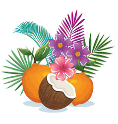 tropical garden with orange and coconut vector image