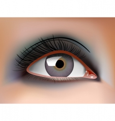 eye closeup vector image vector image