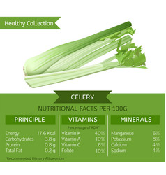 healthy collection celery vector image