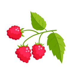 cartoon raspberry with green leaves isolated on vector image