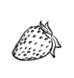 strawberry fruit fresh food design skecth vector image