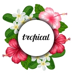 Background with tropical flowers hibiscus and vector image