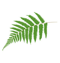 fern tropical leaves botanical element for vector image